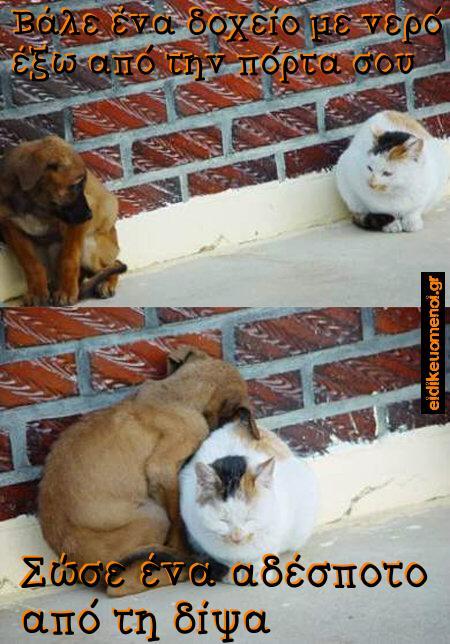 Βάλε ένα δοχείο με νερό έξω από την πόρτα σου για τα αδέσποτα ζώα (σκυλιά, γατιά). Πεθαίνουν από τη δίψα.