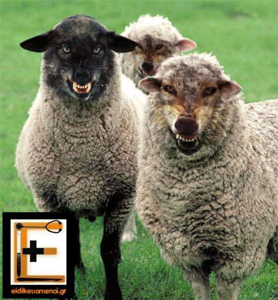 wolf guarding sheep doctor bribe eidikeuomenoi