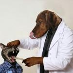 Ντυθείτε σκύλος τις αποκριές.. μπας και σας βγάλουν καμιά ακτινογραφία