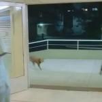 Ο άνδρας και ο σκύλος του [βίντεο]