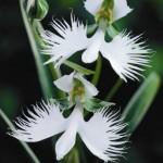 Λουλούδια ανά Ειδικότητα