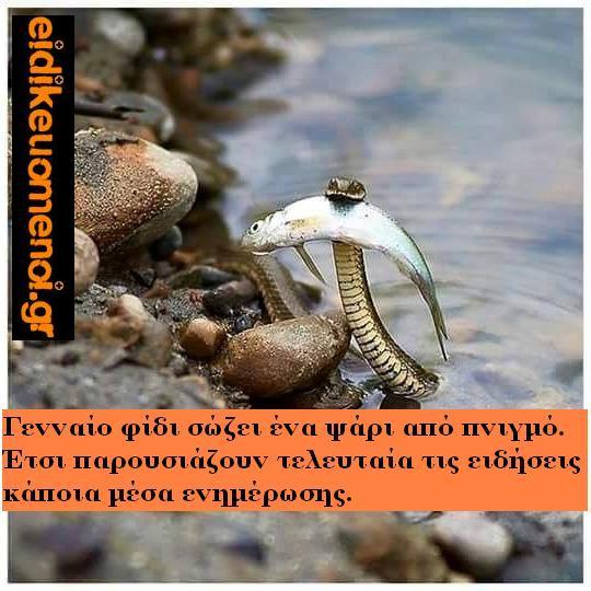 φίδι σώζει ψάρι