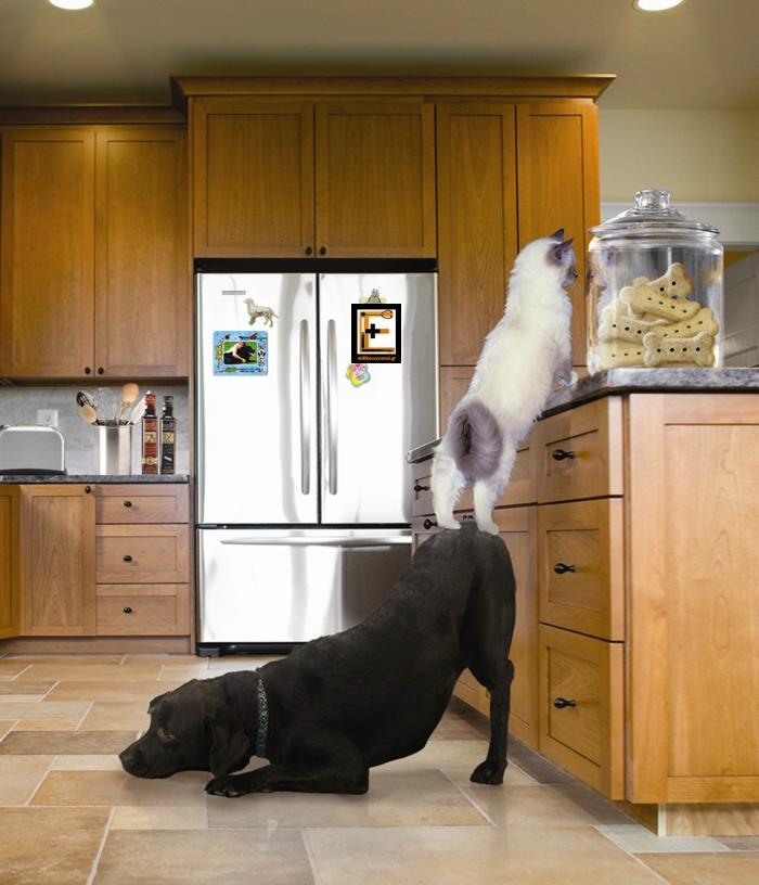 σκύλος βοηθά γάτα για να τον βοηθήσει. Ειδικευόμενοι eidikeyomenoi eidikeuomenoi