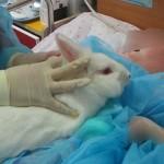 Θεραπεία με τη βοήθεια ζώων στο Παίδων Αγλ.Κυριακού