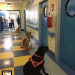 Σκύλοι θεραπευτές στην Ιταλία