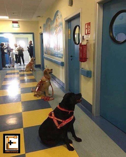 σκύλοι θεραπευτές στην Ιταλία περιμένουν έξω από τους θαλάμους σε παιδιατρικό νοσοκομείο