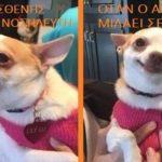 Σκυλίσια ζωή