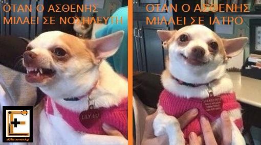 Σκύλος σκυλάκι Τσιουάουα που είναι θυμωμένο ή χαμογελά. Λεζάντα: όταν ο ασθενής μιλά σε Νοσηλευτή, όταν ο ασθενής μιλά σε ιατρό. Ειδικευόμενοι
