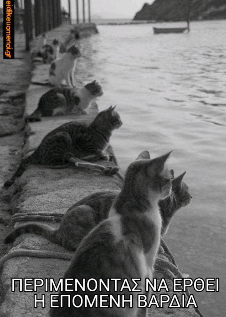 Γάτες που περιμένουν δίπλα στη θάλασσα, λιμάνι. Περιμένοντας να έρθει η επόμενη βάρδια